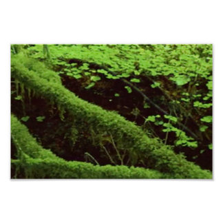 America Tree Line Olympic National Park green moss Poster