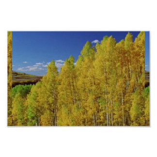America Tree Line Olympic National Park photograph Poster