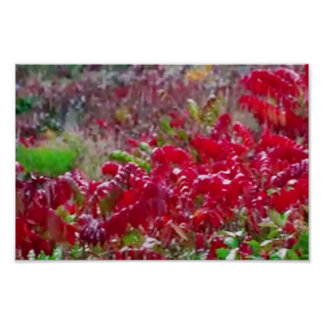 America Tree Line Olympic National Park red flower Poster