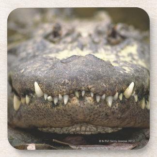 American alligator beverage coaster
