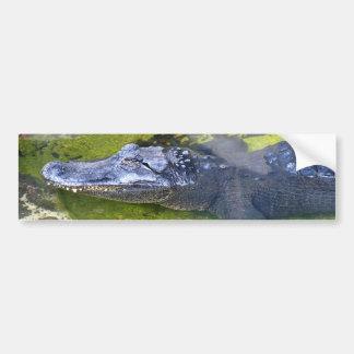 American Alligator Car Bumper Sticker