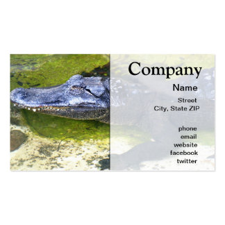 American Alligator Business Card