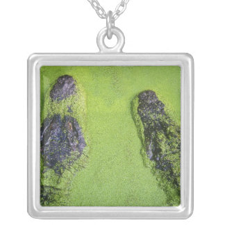 American alligator found throughout Florida Silver Plated Necklace