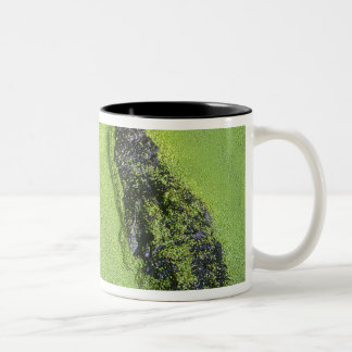 American alligator found throughout Florida Two-Tone Coffee Mug