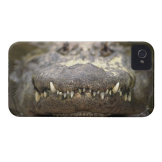 American alligator iPhone 4 Case-Mate case