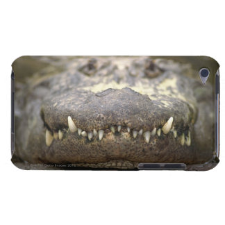 American alligator iPod Case-Mate case
