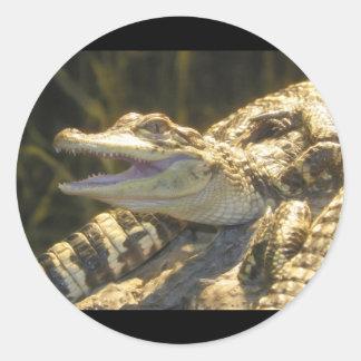 American Alligator Mouth Open Round Sticker