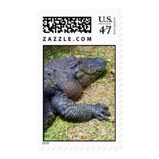 American Alligator Postage