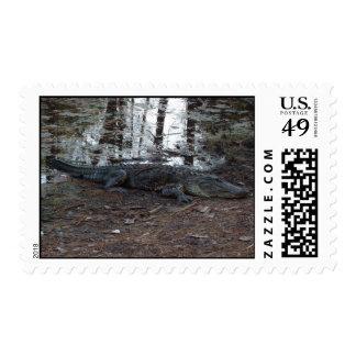 American Alligator Postage Stamps