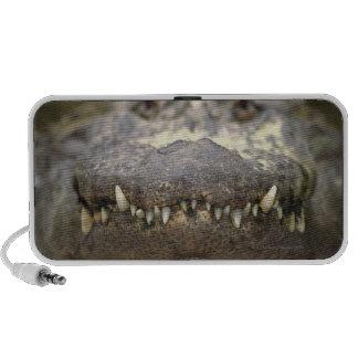 American alligator travel speakers