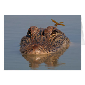 American Alligator with Dragonfly Card