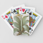 American Aloe: Aloe Americana, from the 'Hortus Ey Bicycle Playing Cards