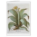 American Aloe: Aloe Americana, from the 'Hortus Ey Card