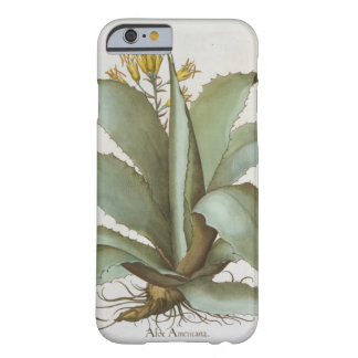 American Aloe: Aloe Americana, from the 'Hortus Ey Barely There iPhone 6 Case