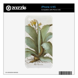 American Aloe: Aloe Americana, from the 'Hortus Ey iPhone 4 Decals