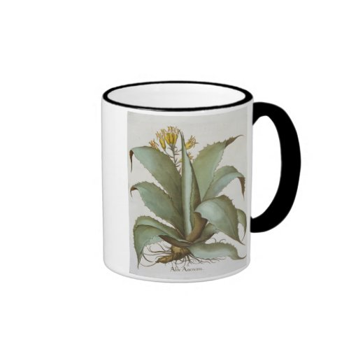 American Aloe: Aloe Americana, from the 'Hortus Ey Ringer Mug