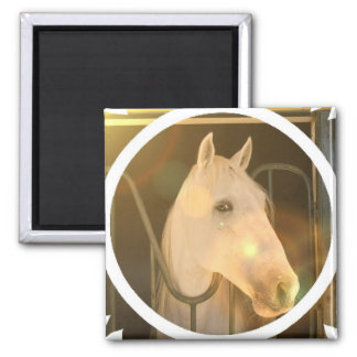 American Andalusian Square Magnet Magnet
