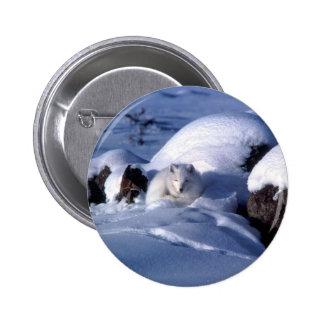 American Arctic Fox Pinback Button