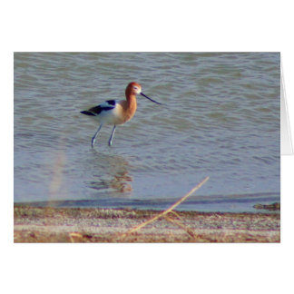 American Avocet Collection Greeting Card