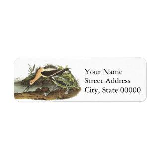 American Avocet, John James Audubon Return Address Label
