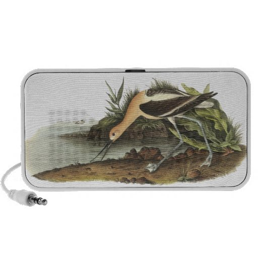 American Avocet, John James Audubon Travelling Speaker
