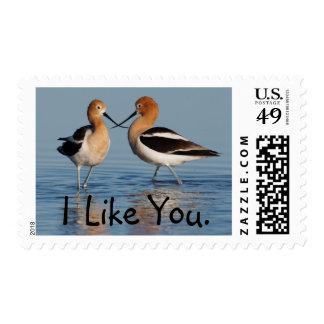 American Avocet Pair Postage