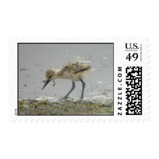 American Avocet stamp