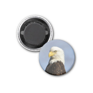 American Bald Eagle 1 Inch Round Magnet