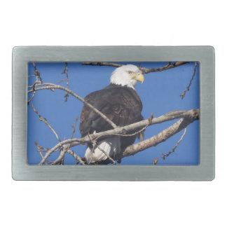 American Bald Eagle Belt Buckles
