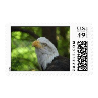 American Bald Eagle Bird on a Postal Stamp