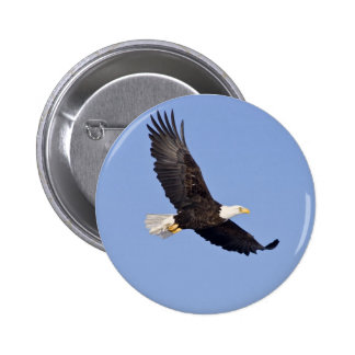 American Bald Eagle Buttons