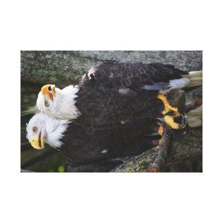 American Bald Eagle Canvas