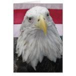 American Bald Eagle Cards