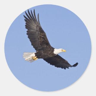 American Bald Eagle Classic Round Sticker