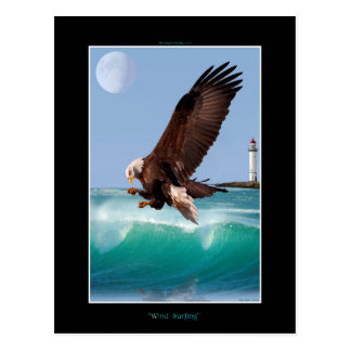 American Bald Eagle Design for Bird-lovers Postcard