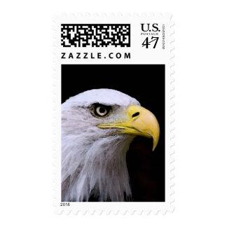 American Bald Eagle Eye Postage Stamps
