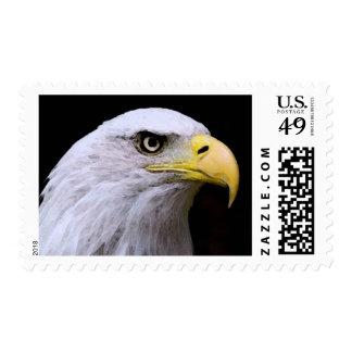 American Bald Eagle Eye Stamps