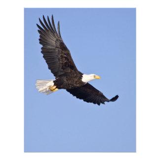 American Bald Eagle Flyer Design