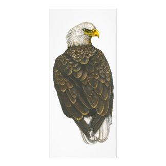 American Bald Eagle Full Color Rack Card