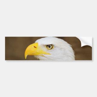 American Bald Eagle Haliaeetus Leucocephalus Bumper Sticker