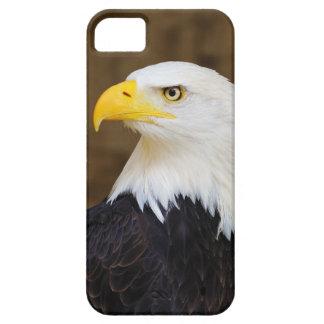American Bald Eagle Haliaeetus Leucocephalus iPhone SE/5/5s Case