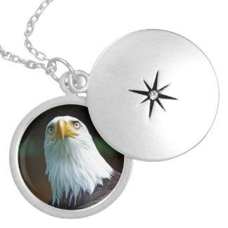 American Bald Eagle Head 001 02 Locket Necklace