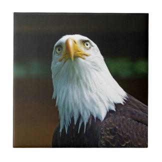 American Bald Eagle Head Ceramic Tile