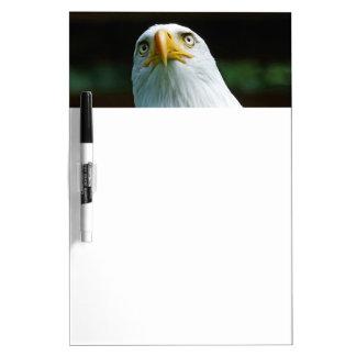 American Bald Eagle Head Dry-Erase Board