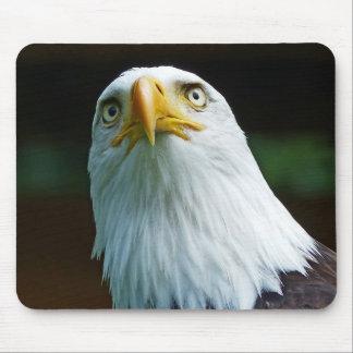 American Bald Eagle Head Mouse Pad
