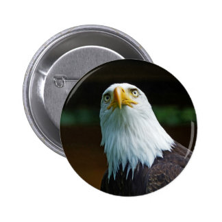 American Bald Eagle Head Pinback Button