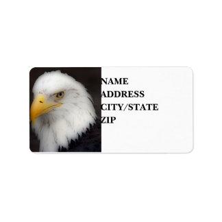 'American Bald Eagle in Portrait' Label