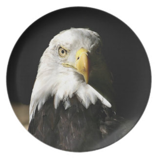 American Bald Eagle in shadoe Melamine Plate