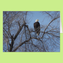 American Bald Eagle in Tree Card - Blank Inside