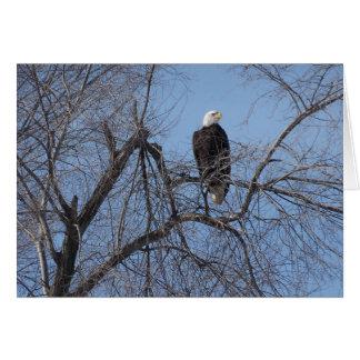 American Bald Eagle in Tree Card - Blank Inside
